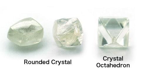 選び抜かれた原石